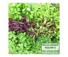 Микрозелень Пикантная, смесь семян