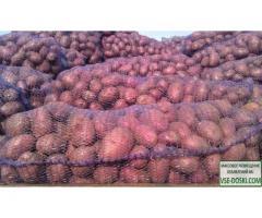 Картофель продовольственный оптом от производителя